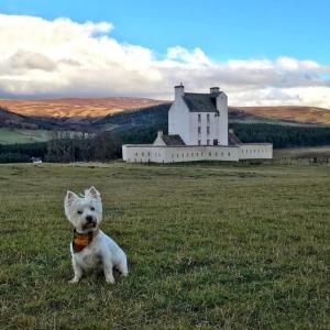 Highland cows and 5-star luxury in Aberdeenshire