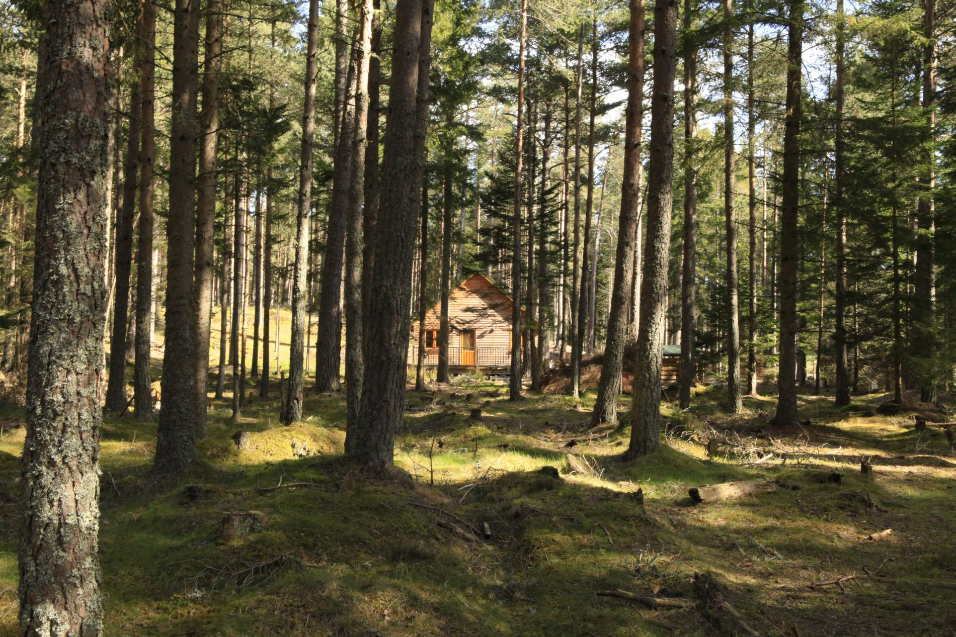 Cairngorm Lodges Luxury Self Catering In A Forest Setting