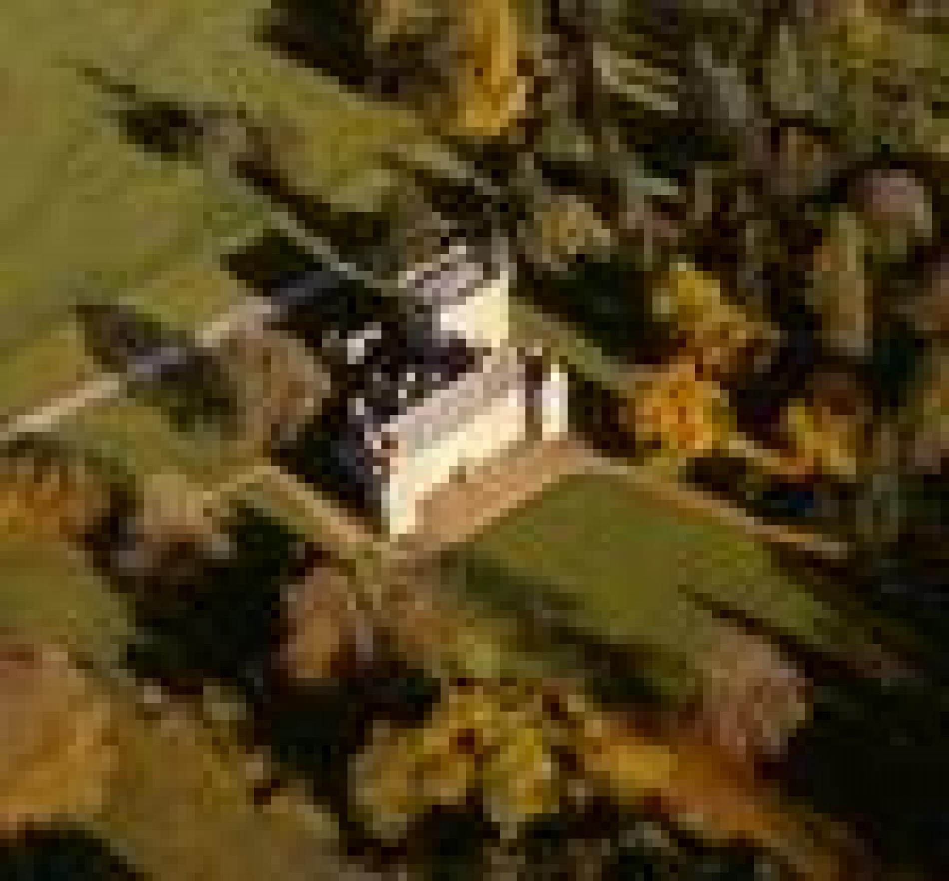 Castle Point Apartments: Drum Castle, Garden And Estate
